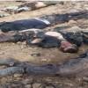 Irak Ordusundan IŞİD Kalıntılarına Ağır Darbe: 18 Ölü