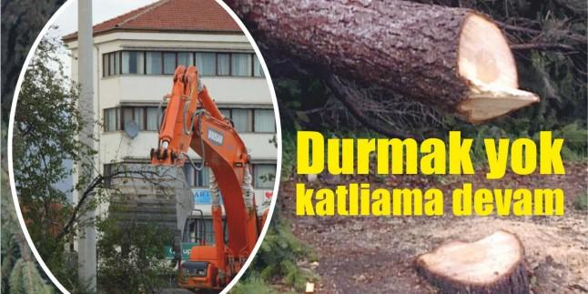 Ağaç Katliamlarıyla Gündemden Düşmeyenler Ağaç Seferberliği Başlatıyorlar…