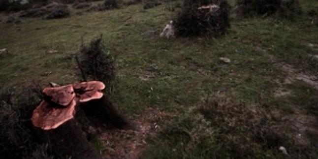 Ağaç Katliamları Bitmek Bilmiyor: Bu Kez İzmir…