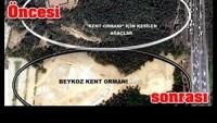 Burası Türkiye: Orman(!) Yapmak İçin Ağaç Kesiyorlar…