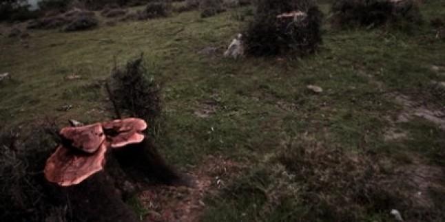 Gün Geçmiyor ki Yeni Bir Ağaç Katliamı Yapılsın…