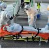 Ebola virüsü vakası 20 bini aştı