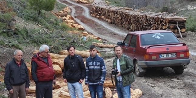 Uşak'ta Seyreltme Adı Altında Binlerce Ağaç Katledildi…
