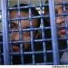 Filistinli esirlerin çocuklar dahil %90'ı sorgu merkezleriyle cezaevlerinde işkenceye maruz kaldı