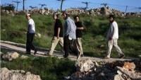 Siyonist Yerleşimciler El-Halil'de Zeytin Ağaçlarını Telef Etti…