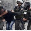 El-Halil'de 2014  Yılı İçinde 1700 Kişi Gözaltına Alındı