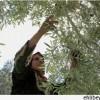 Filistinli Kadınlar Zor Şartlarda Yaşam Mücadelesi Veriyor