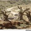Yahudi Yerleşimciler El-Halil'de Onlarca Üzüm Ağacını Tahrip Etti