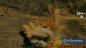 İran İslam Cumhuriyeti, Şehidlerin İntikamını PJAK Teröristlerinden Ağır Bir Biçimde Aldı: Yüzlerce Ölü