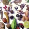 İran'dan Asya ülkelerine bitkisel ilaç ihraç edilecek