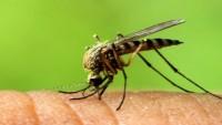 Zika virüsü 33 ülkeye yayıldı