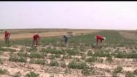 Siyonist rejimin Gazze halkına yönelik cinayetleri sürüyor