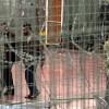 Siyonist İsrail'in ırkçı girişimleri devam ediyor