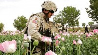 Afgan uzman: Afganistan'da uyuşturucu üretiminin artış sebebi Amerika'dır