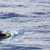 Kıbrıs açıklarında mülteci teknesi battı: 19 ölü, 25 kayıp