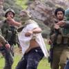 Yahudi Yerleşimciler El-Halil'in Güneyinde Filistinli Çiftçilere Saldırdı