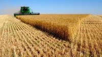İran dünya piyasalarına buğday ihraç edecek