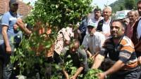 Çiftçilerin ÇAYKUR protestosu