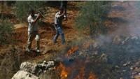 Siyonistler, Filistinlilere Ait 100 Dönümlük Ekili Alanı Yaktı
