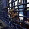Filistin'li kadın esirlerin grevi 40. gününde