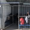 İşgal Güçleri Tutukladığı Filistinlilere Karşı İnsanlık Dışı Uygulamalarını Artırdı