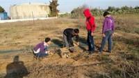 Siyonist İşgal Güçleri Gazze Sınırında Kuş Avcısı Çocukları Hedef Alıyor