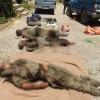 İran Etkisiz Hale Getirilen Teröristlerin Fotoğraflarını Yayınladı