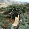 Siyonist İşgal Güçleri El-Halil'in Kuzeyinde 3 Su Kuyusunu Yıktı, 100 Ağacı Söktü