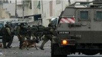Siyonist İşgal Güçleri Bu Sabah Batı Yaka'da 13 Filistinliyi Gözaltına Aldı