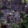 Myanmar hükümetinin Rohingyalı Müslümanlara yönelik vahşeti görüntülendi