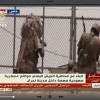 Yemenli Mücahidler, Suud'un Necran Kentini Kuşattı