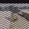 Güney Yemen hapishanelerindeki mazlum halka Amerikalı askerler işkence ediyor