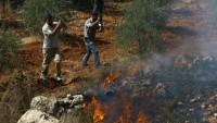 Siyonist Yerleşimciler Nablus'ta Zeytin Ağaçlarını Ateşe Verdi