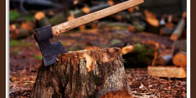 Gün Geçmiyor ki Yeni Bir Ağaç Katliamı Yapılsın: Bartında 43 Bin Ağacın Kesileceği İddia Edildi…
