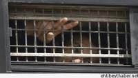 Siyonist İsrail Zindanlarında Esir Tutulan Filistinli Mahkumlar Açlık Grevi Başlattı…