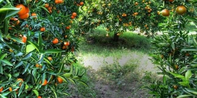 Çiftçiden 25 kuruşa, Halk'a 2.5 TL'ye