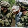 İşgal Güçleri Bu Sabah Batı Yaka'da Yedi Filistinliyi Gözaltına Aldı…