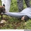 Yahudilere Ait Bir İnsan Hakları Kuruluşu İşgal Güçlerinden Filistinlilere Karşı Köpek Kullanmayı Bırakmalarını İstedi…