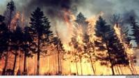 Rusya'da Orman Yangını: 4 Ölü, 70 Yaralı