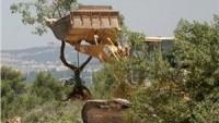 Korsan İsrail, Filistinlilerden Selfit'te 2000 ağacı sökmelerini istedi