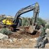İşgal Buldozerleri Nablus'un Doğusunda 100 Dönüm Tarım Arazisini Tahrip Etti.