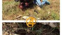 Korsan İsrail Polisi, İşgal Askerini Bıçaklayan Filistinli Genci Gözaltına Aldı.