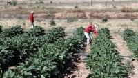 İsrail Gazze arazilerine biyolojik saldırı gerçekleştirdi