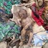 UNICEF: Yemen'de her gün 8 çocuk ölüyor