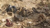 Irak'ta 18 toplu mezar bulundu