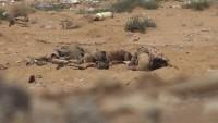 Yemen'de onlarca Suudi işbirlikçi öldürüldü