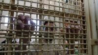 Filistinli 60 esir açlık grevine başladı