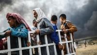 Musul'da 21 bin göçmen iskan edildi