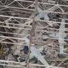 ABD'nin Tyndall Hava Üssü Allah'ın Gizli Ordularından Sayılan Michael Kasırgası'yla Yerle Bir Oldu