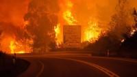 Portekiz'de Orman Yangınında Ölenlerin Sayısı Giderek Artıyor: 43 Ölü